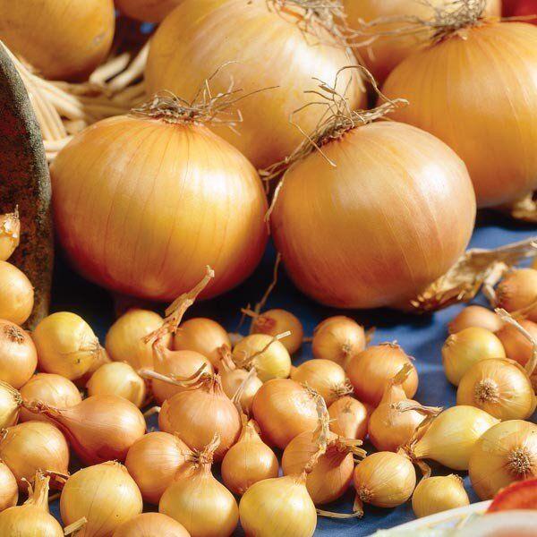 лук севок оптом в батырево купить